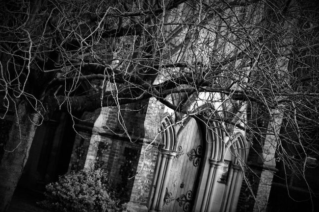 Blackandwhite Photography Its  That  Old Spooky Church Graveyard.. Again Taking Photos Norwich Feeling Creative Nikonphotography Tree_collection  Eye4photography  Tree Porn Spooky Atmosphere EyeEm Best Shots - Trees Showcase: January
