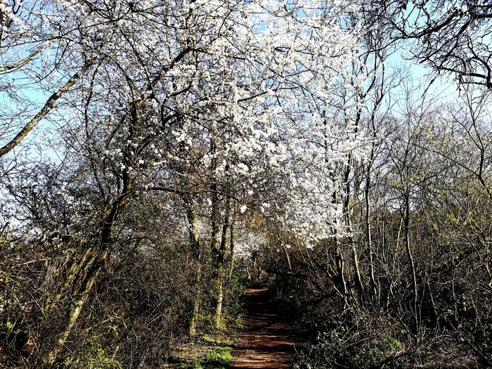 View of cherry tree in forest