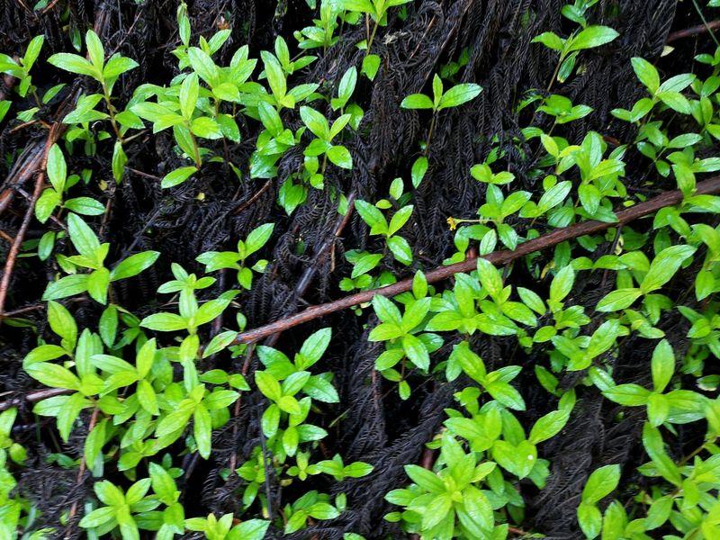 Black & Green Leaves Green Black Nature Fresh Forrest Plants Outdoors