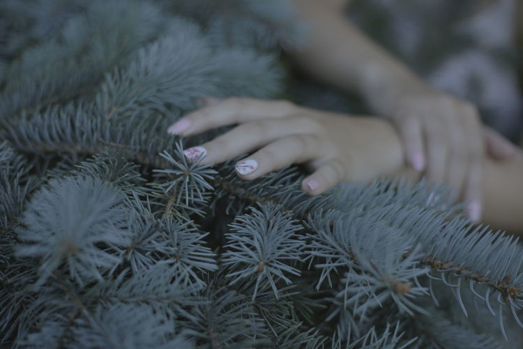 Close-Up Of Woman Hand Touching Spruce Tree