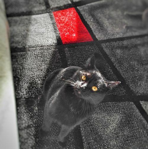 Cats Cat BLackCat
