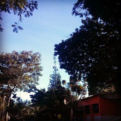 Muito bonita a paisagem, é uma pena que seja o colégio... School Trees Silhouette_collection