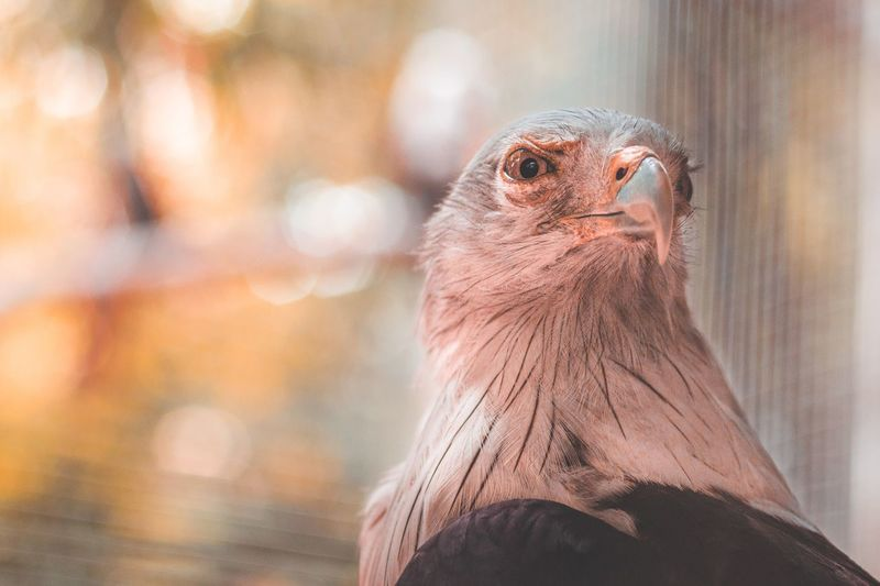 Close-up portrait of bird