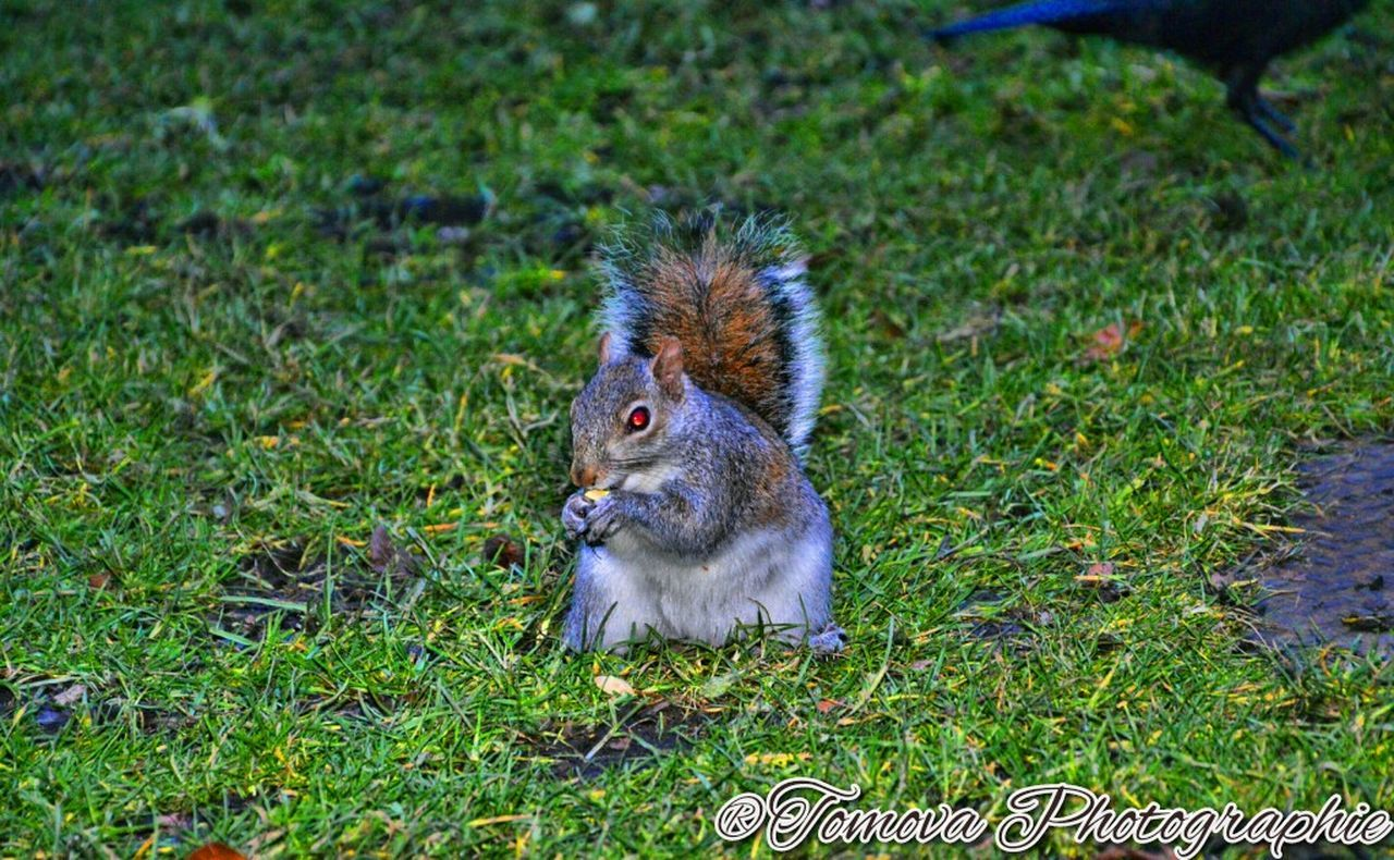 grass, animal themes, one animal, day, no people, mammal, outdoors, alertness, pets, nature, domestic animals, close-up