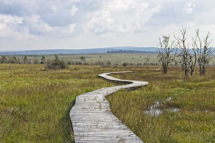 Wooden plank path in Hautes Fagnes Hohes Venn Cloud - Sky Direction Footpath Grass Hautes Fagnes Land Landscape Nature No People Non-urban Scene Outdoors Plant Scenics - Nature Sky The Way Forward Trail Tranquil Scene Tranquility Wooden Planks