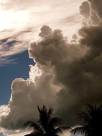 Nature No People Outdoors Beauty In Nature Day Clouds Cloudy Sky Nuvem Céus E Nuvens Céu E Nuvem Céu OEstranhoMundoDePaulinhoAguiar Nuvens Cloud - Sky Nature Tree Sky Beauty In Nature Power In Nature Palm Tree Ceudobrasil Archival Landscape