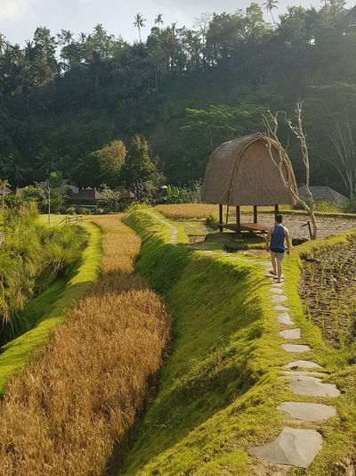 Outdoors People Day Beauty In Nature Nature Walk Path Pathway Path In Nature Padi Field Bali Bali, Indonesia Village Travel Photography INDONESIA Social Issues