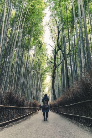 Man walking on footpath in forest