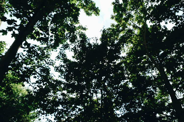 Try not to focus. Beauty In Nature Branch Day Forest Full Frame Green Color Growth High Land Low Angle View Nature No People Outdoors Plant Scenics - Nature Silhouette Sky Sunlight Tranquility Tree Tree Canopy
