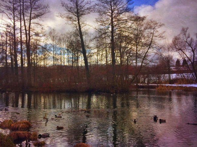 Frosty water Landscape_Collection Mexturesapp Streamzoofamily EyeEm Best Shots EyeEmSwiss Treegasm Reflection