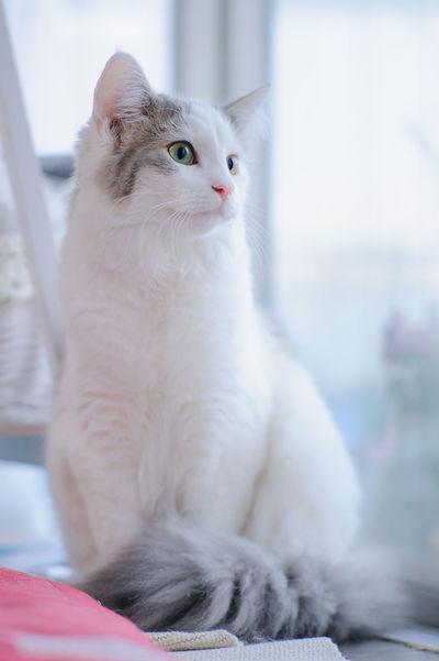 Animal Animal Themes Cat Cat Lovers Cat Photography Cat Portrait Cats Of EyeEm Close-up Cute Cute Pets Domestic Animals Domestic Cat Domestic Pets EyeEm EyeEm Gallery Feline Indoors  Mammal Pet Portraits One Animal Pet Portrait ねこ 猫 猫ぽとれ