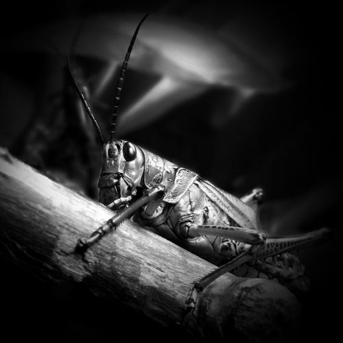 Buggin'... Shootermag AMPt_community EyeEm Bnw Insects