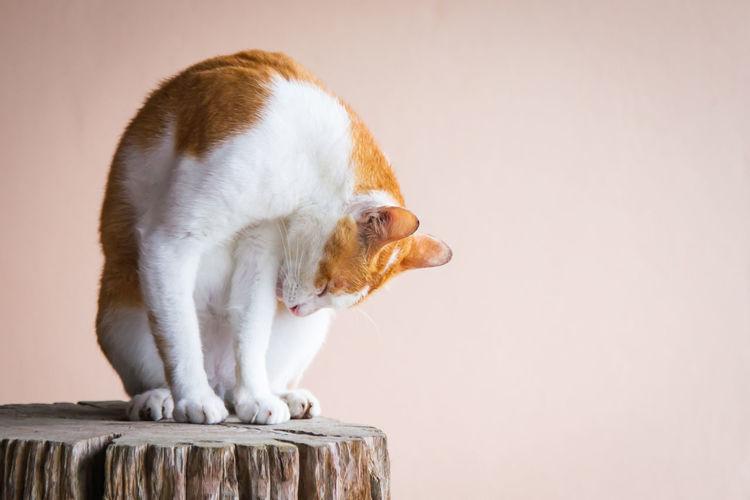 Close-up of cat sitting on tree stump