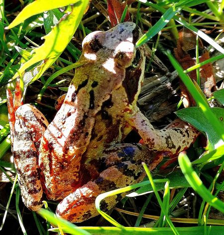Frog Frog Pond Frog King Springtime My Park🌲🏞🏡🌾👍