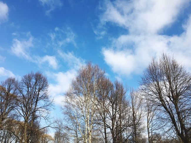 Tree Sky Low Angle View Nature Cloud - Sky Beauty In Nature Bare Tree No People Growth Outdoors Day Branch Scenics Treetop Tavrichesky Garden Saint Petersburg Russia 🇷🇺
