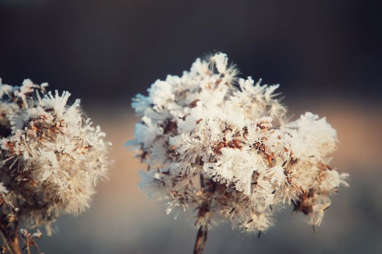 -5°C Nature Winter Plant Cold Temperature Ice Beauty In Nature Close-up Streamzoofamily EyeEm Gallery Outdoors Ice Crystal Nature