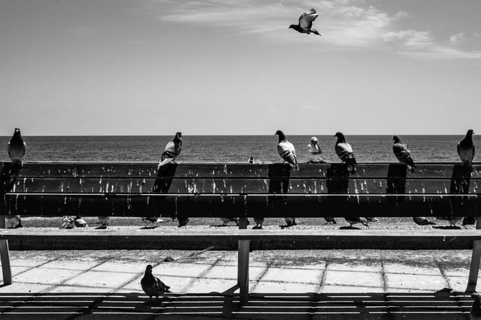 a bunch of evolving beings (except for one) • Involution Regression Pigeons Bench Old Man Old Man Sitting Discreet Photography Bnw Bnw_collection The Week On EyeEm Street Photography B&w Street Photography Black And White Fujixseries Fujixt10 Sea Outdoors Only Men Solitary Man Solitude