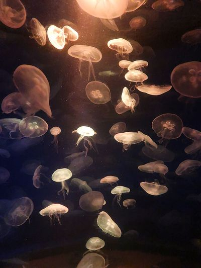Moody Jellyfishes Saltwater Silence Lights Underwater Belowsealevel Aquarium Nature Mood Water Mallorca Jellyfish No People Close-up Backgrounds Full Frame Nature Night Large Group Of Objects Marine Sea Illuminated Animal Wildlife Water Animal Lens Flare Pattern