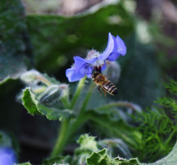 Insect Animal Themes Animals In The Wild One Animal Nature Bee Plant Flower Pollination