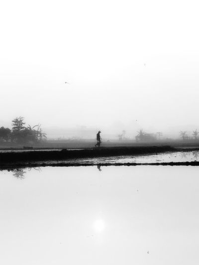 In the morning at paddy field Black And White Friday