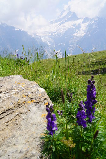 Beauty In Nature Cloud - Sky Day Environment Field Flower Flowering Plant Freshness Green Color Growth Land Landscape Lavender Mountain Mountain Range Nature No People Outdoors Plant Purple Scenics - Nature Sky Tranquil Scene Tranquility