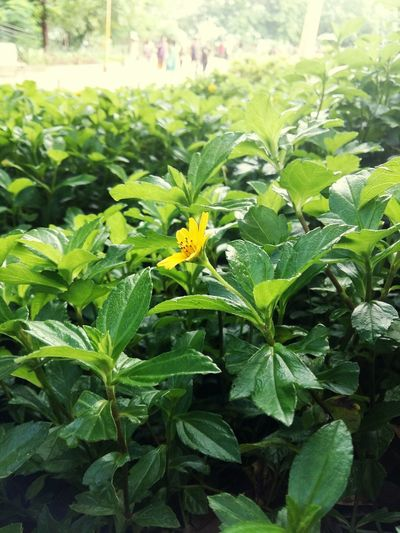 Mumbai Mobilephotography EyeEm Best Edits Sunlight Garden Photography Flower Leaves Focus Green 😉 Hanging_garden