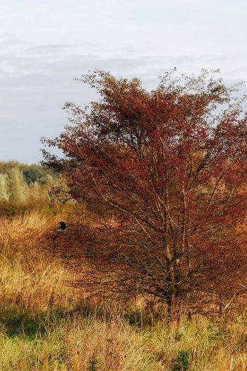 Bird Orton Effect Berries Landscape_Collection