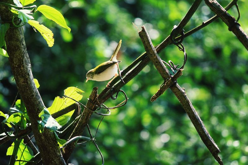 Freelance Life Enjoying Life Check This Out EyeEm Nature Lover Birdfreaks :*:*:*:* First Eyeem Photo