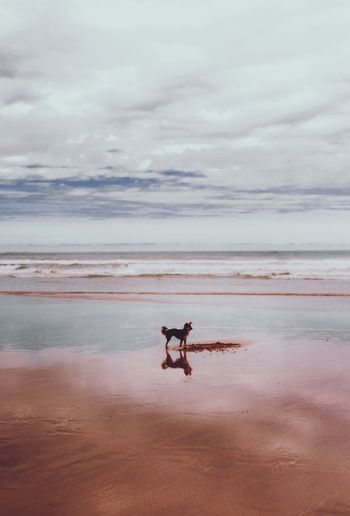 Dog standing at beach against cloudy sky