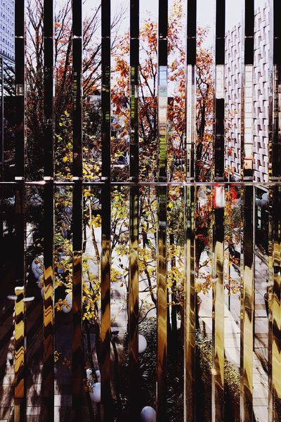 Fence Fences No People Day Architecture Modern Japan Tokyo Barrier Abstract Graphical Mood Moody Indoors  Close-up Tsutaya Reflection Reflections Tree Trees Mirror
