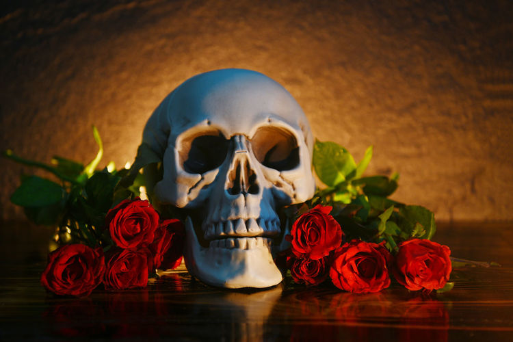 Close-up of roses and skull on table