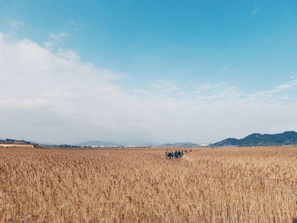 Reeds Fall South Korea Sooncheonmaan