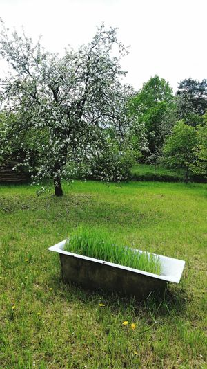 Miles Away Green Color Tree Growth No People Nature Grass Outdoors Day Close-up Sky Bath Blossoms