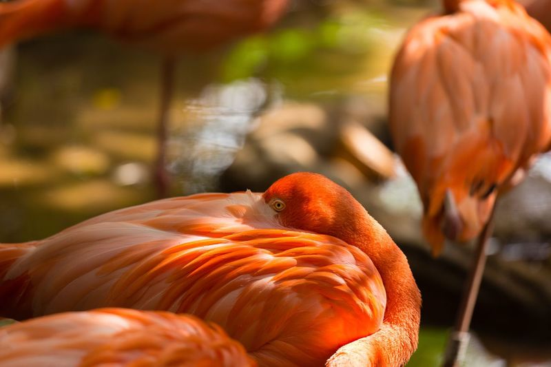 flamingo Eyes Flamingo Food And Drink Food Orange Color Pumpkin Focus On Foreground Freshness Close-up No People Sunlight Outdoors