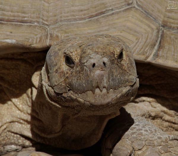 Animal Animals Nature Animal Themes Looking At Camera Turtle 🐢 Tortoise Reptiles Reptile Sun River Turtle