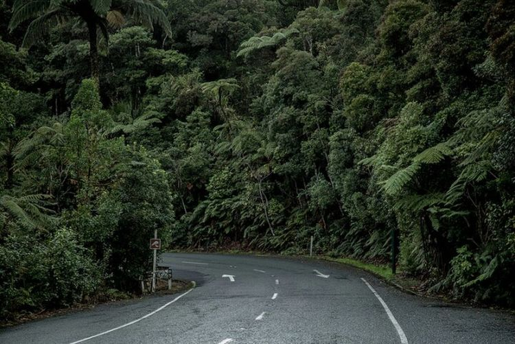 Road Forest Waipoua New Zealand Road Inspirational Arrows Travel