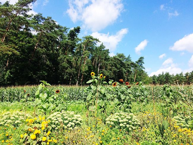 Growth Sky Nature Flower Field Cloud - Sky Day Beauty In Nature Outdoors Plant No People Tree Landscape Freshness