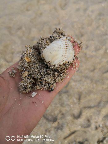 EyeEm Selects Human Hand Sea Life Beach Sand Holding Close-up Animal Shell