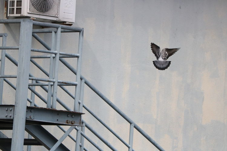 View of a bird flying against the wall