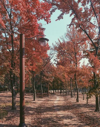 Tree Autumn Change Nature No People Tranquility Leaf Branch Low Angle View Outdoors Bare Tree Day Beauty In Nature Growth Scenics Sky