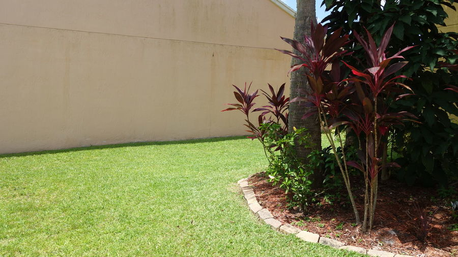 Plants growing in front of wall
