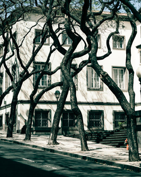 take 5 Interesting Perspectives Natural Light People Watching Architecture Bare Tree Branch Building Building Exterior Built Structure City Day Footpath Nature Outdoors People Plant Road Shadow Sky Street Street Photography Streetphotography Tree Tree Trunk Trunk
