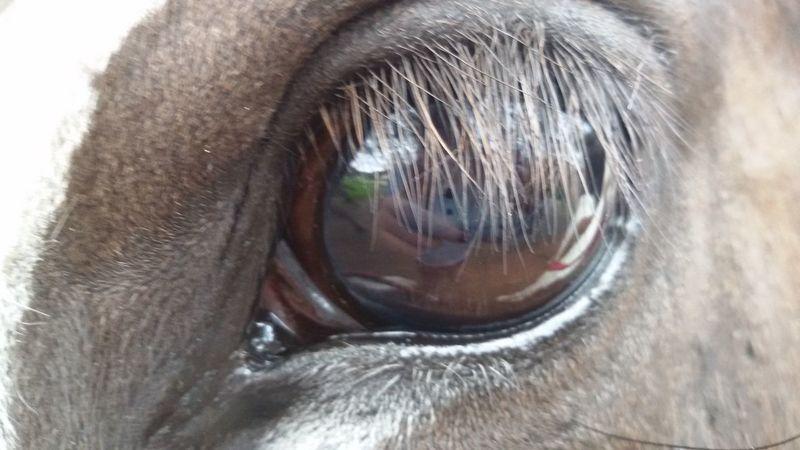 Pferdeliebe Pony❤️ Ponys💙 Eye Horseeye