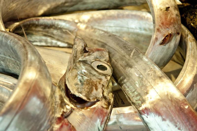 pesce sciabola - ph©Pino Miraglia Mediterranean Sea Pino Miraglia Photographer Marketfish Mediterranean Fish Pesce Bannera Pesce Sciabola Pesce Spatola