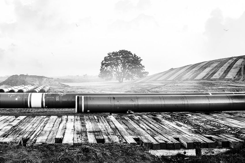 Sky No People Agriculture Day Nature Outdoors Tree Pipe Construction EyeEm Best Shots Kris Slater Dawn Industrial Nature Sand Lines Editorial  Construction Site Fog Cloud Bestoftheday Florida Landscape Blackandwhite New photo taken right before sunrise of a single tree standing strong at a construction site for a pipeline and vacation home community taken around 6am 12/27/2016. For sale as stock image for commercial and editorial full resolution with original color available.