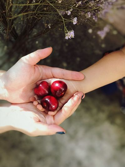 Cropped Image Of Hands Holding Red Berries