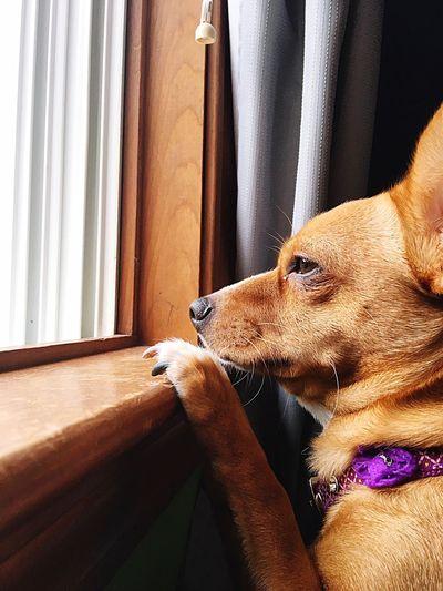 Eye Boogers Dog Bailey