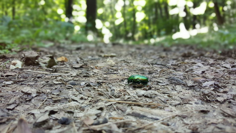 Bug Green Bug Forest Forestwalk Fruška Gora Trail Colourful Ground Forrest Trail