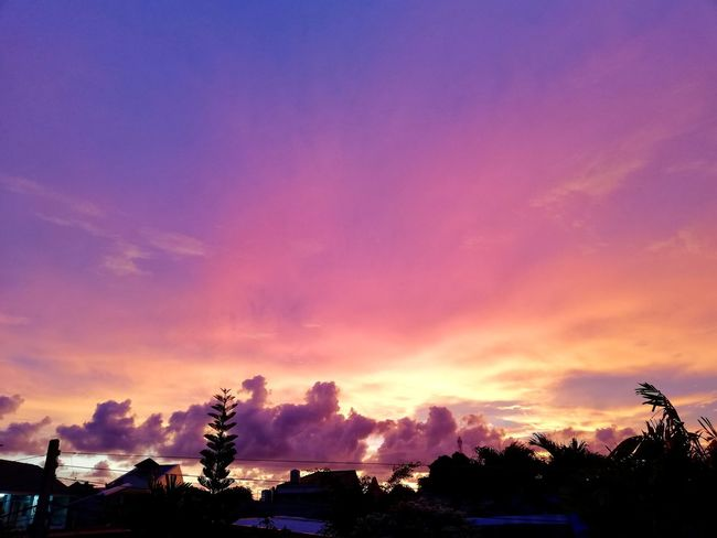 Sky Sky And Trees Cloud - Sky Phuket,Thailand Pink Color Sunset Tree Sunset City Multi Colored Silhouette Dusk Sky Cloud - Sky Periwinkle Blooming Zinnia  Cosmos Flower Dramatic Sky Eastern Purple Coneflower Lightning Magenta Dahlia Petal Aurora Polaris Moody Sky Bougainvillea Peony  Thunderstorm Forked Lightning