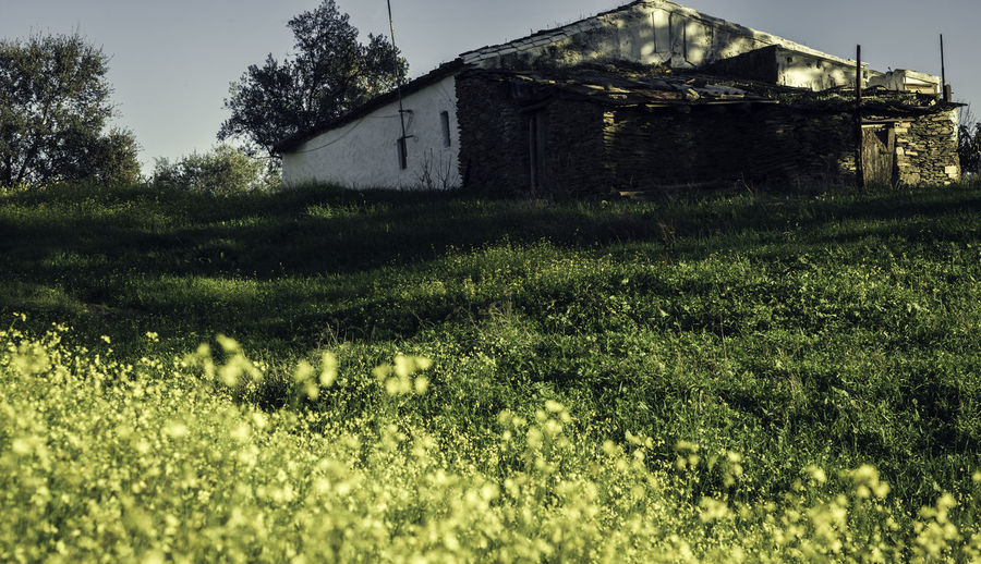 Country house from below Barn Grass Agriculture Architecture Beauty In Nature Building Exterior Built Structure Day Farmhouse Field Grass Growth House Nature No People Olives Outdoors Rural Scene Sky Stone Facade Tree White Facade Yellow Flowers
